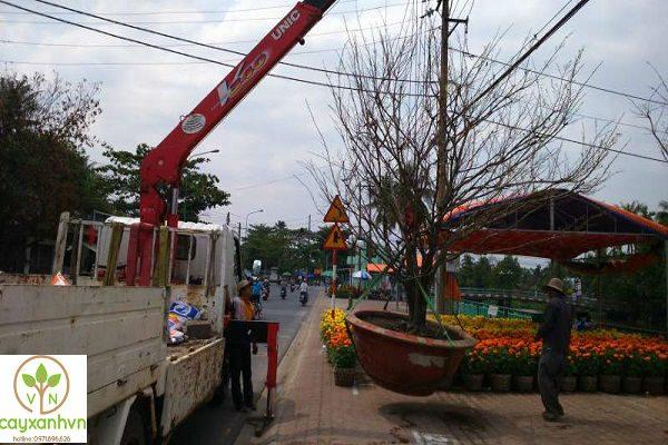 Cây xanh Việt Nam dùng xe chuyên dụng di dời cây xanh đi đến địa điểm cần thiết