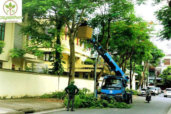Dịch vụ di dời cây xanh của Cây xanh Việt Nam