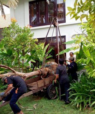 Dịch vụ thu mua cây xanh của công ty Cây Xanh Việt Nam