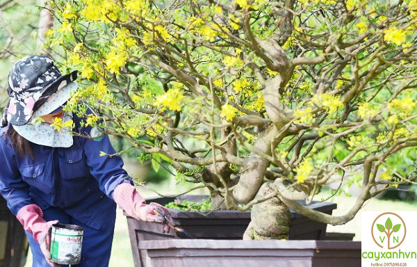 Quy trình bón phân sau khi trồng cây xanh của Cây Xanh Việt Nam