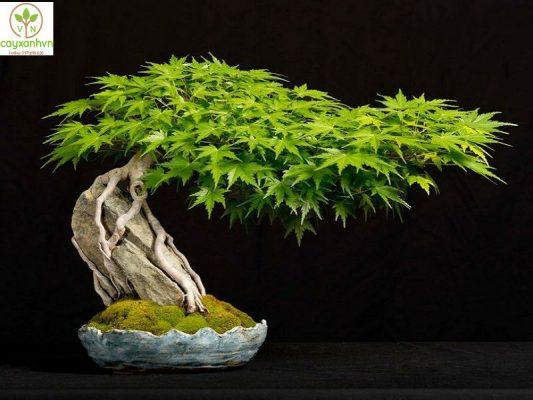 Dịch vụ trồng cây quý hiếm của Cây Xanh Việt Nam