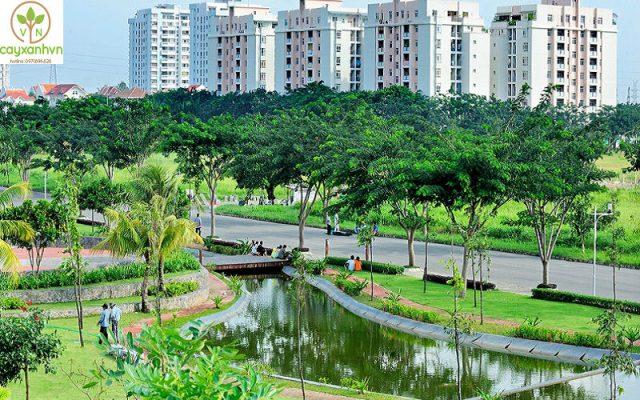 Dịch vụ trồng cây công trình của Cây Xanh Việt Nam