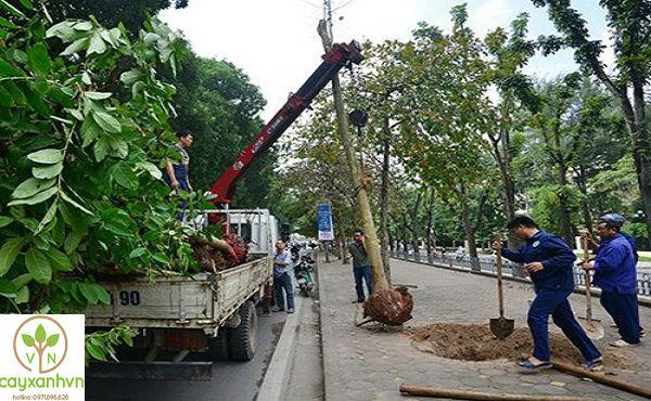 Quá trình trồng cây của Cây Xanh Việt Nam