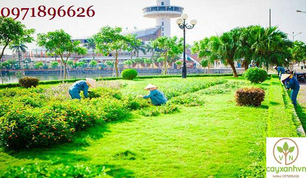 Dịch vụ trồng cây xanh của Cây Xanh Việt Nam