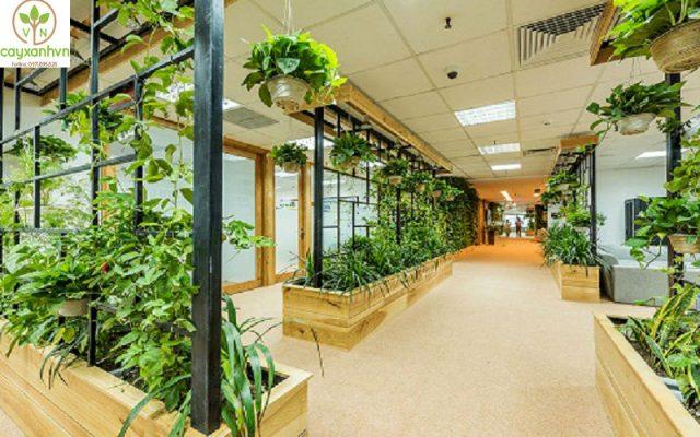 Dịch vụ trồng cây nội thất của cây Xanh Việt Nam