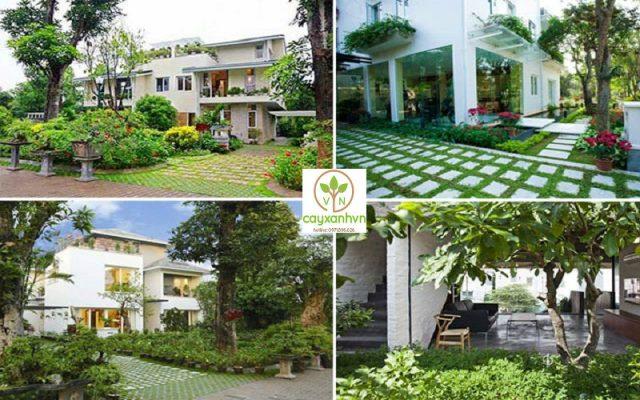 Dịch vụ trồng cây xanh nội thất của cây xanh Việt Nam